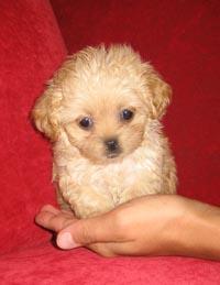 Pocket Puppies Boutique 2479 N Clark St Chicago Il