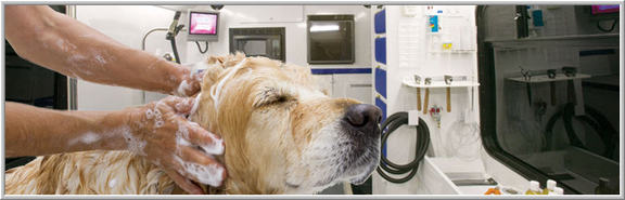 Platinum pet mobile grooming in temecula ca 29045 via norte platinum pet mobile grooming solutioingenieria Gallery