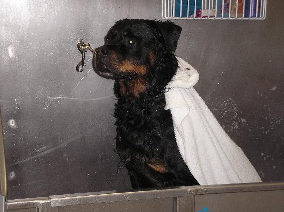Staunton dog wash groom llc in staunton va 909 royal st staunton dog wash groom llc solutioingenieria Images