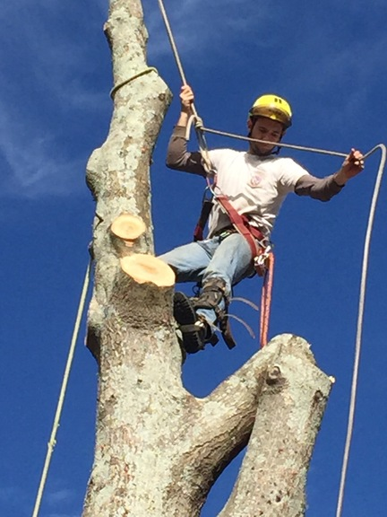 landscaping canton ga travis tree care landscaping in canton ga 1407 reinhardt