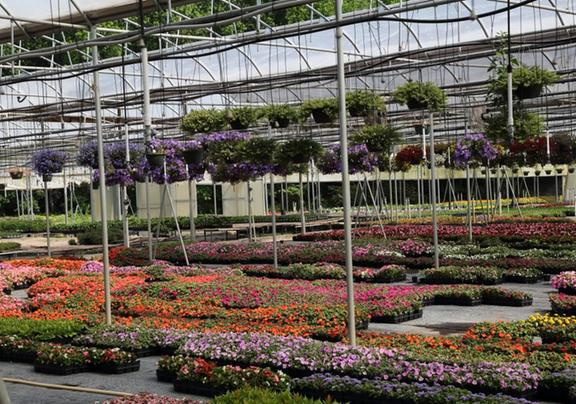 King S Greenhouse Garden Center 524 Stallings Rd Matthews Nc