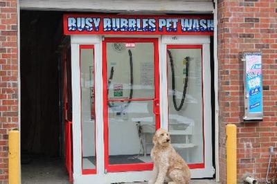 Busy bubbles pet wash in des moines ia 532 31 st street des busy bubbles pet wash solutioingenieria Image collections
